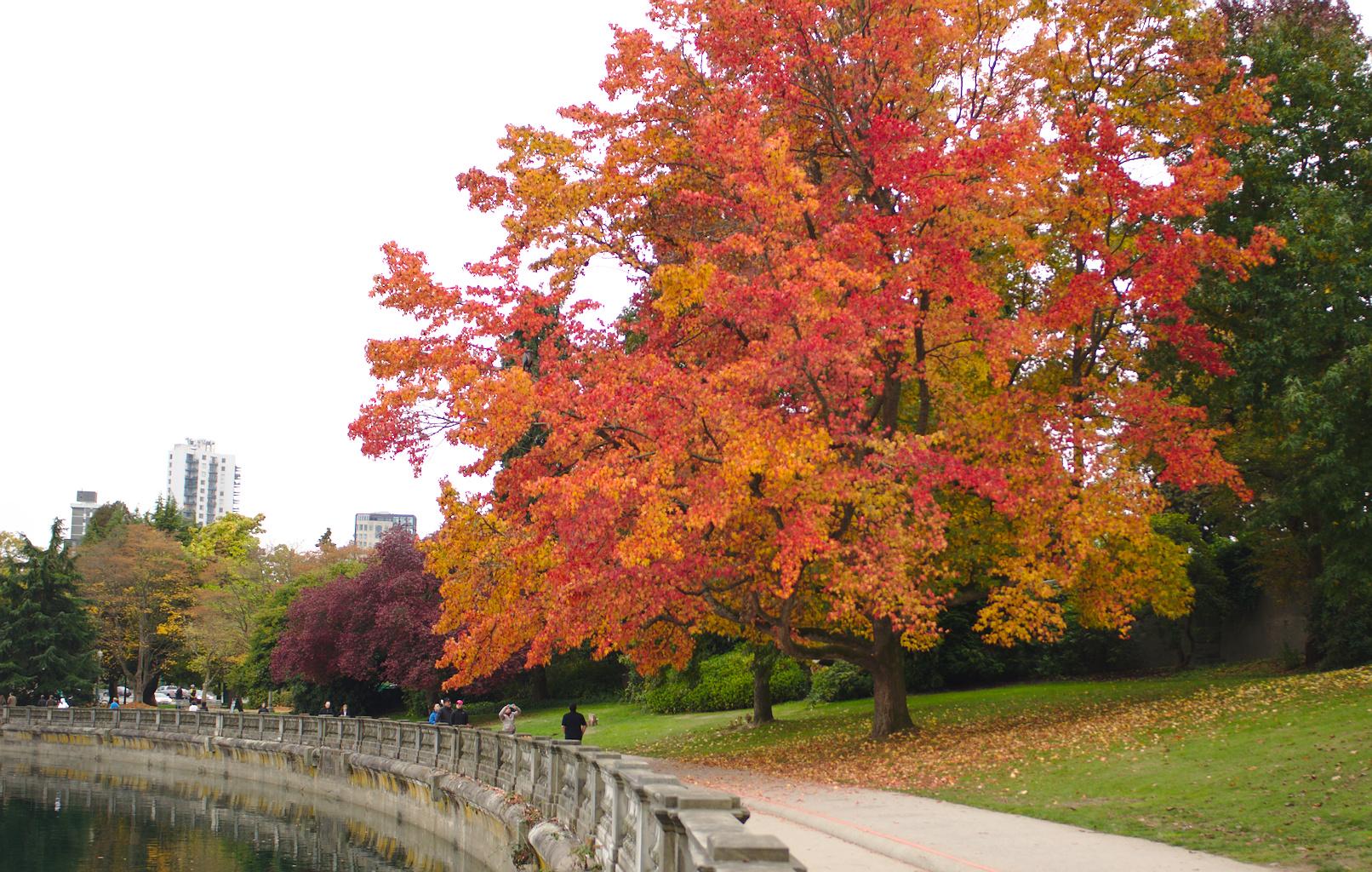 Stanley Park - největší park města a zároveň plíce Vancouveru