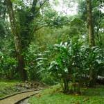 Pršelo nám v Palenque