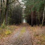 Několik kilometrů dlouhá rovná cesta